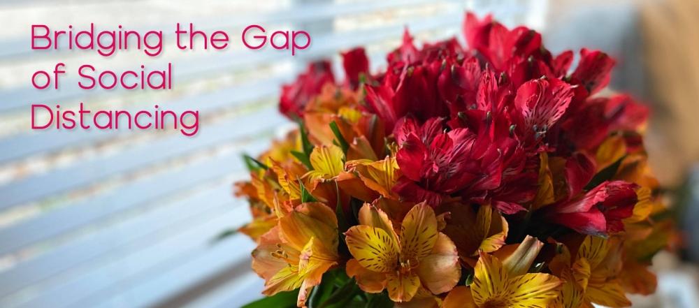 Bridging the Social Gap crop